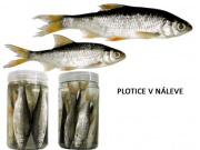 PLOTICE V NÁLEVE